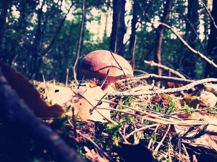 duży grzyb