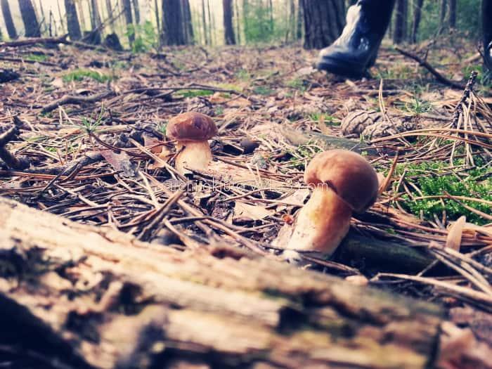 grzyby natura i cholewka